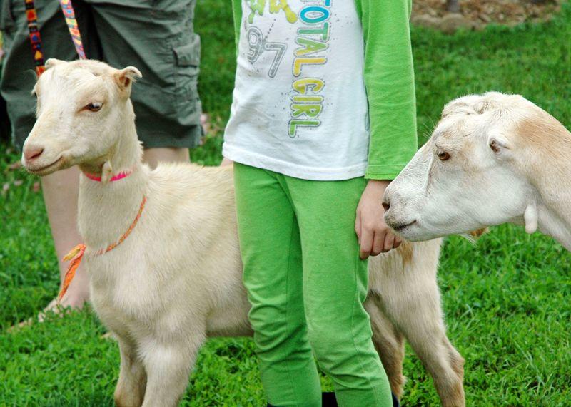 Wk 1--global citizens--goats2