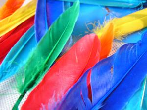Turkey_feathers