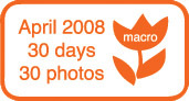 Orange_30day_badge_2